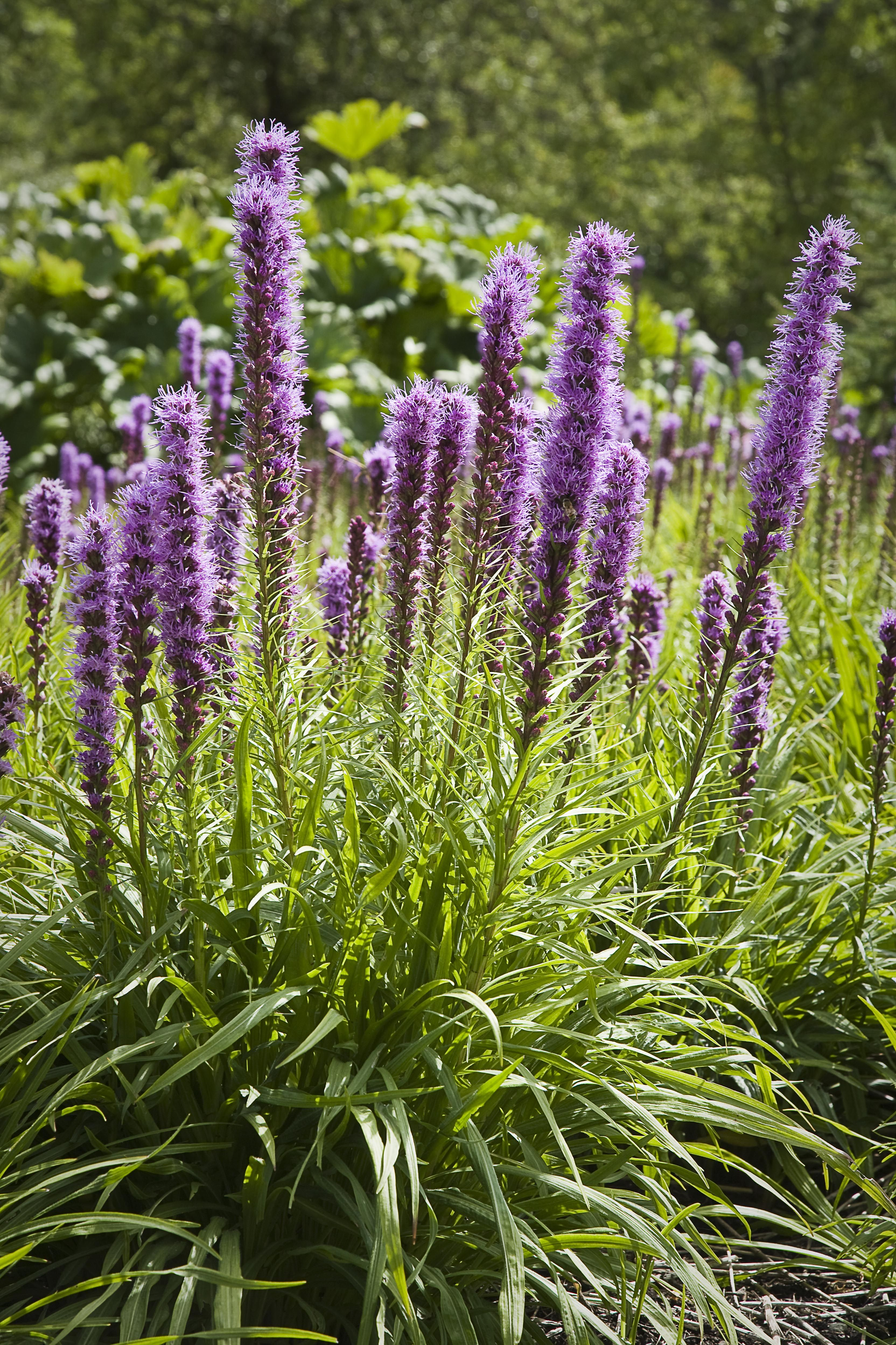 10 Best Full Sun Plants Heat Tolerant Flowers That Love The Sun