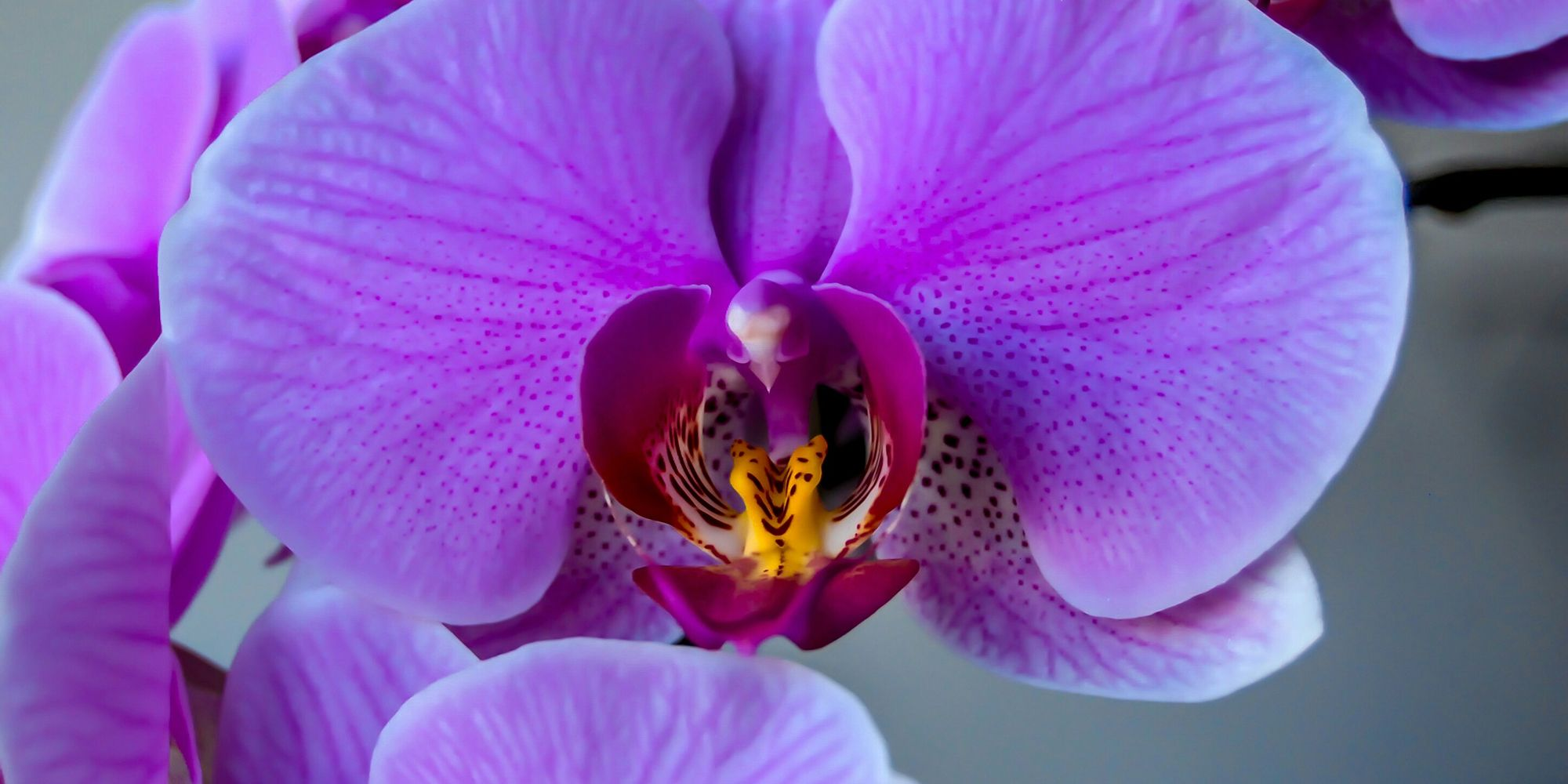Scientists Have Discovered an Extremely Rare Type of Orchid