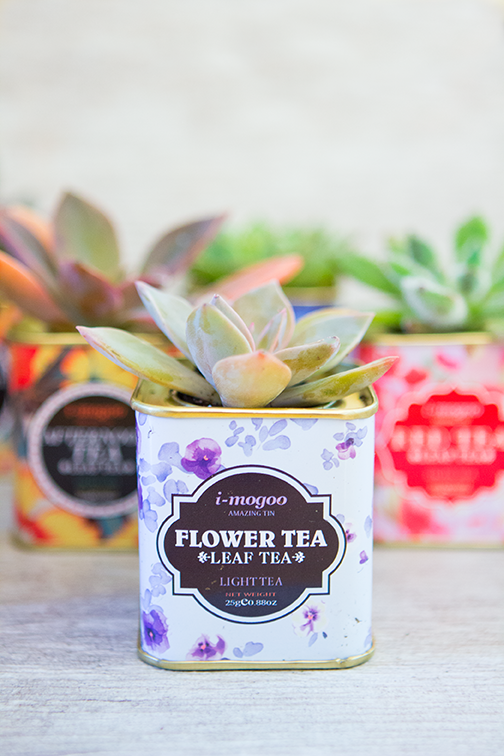 tea tin succulent planter