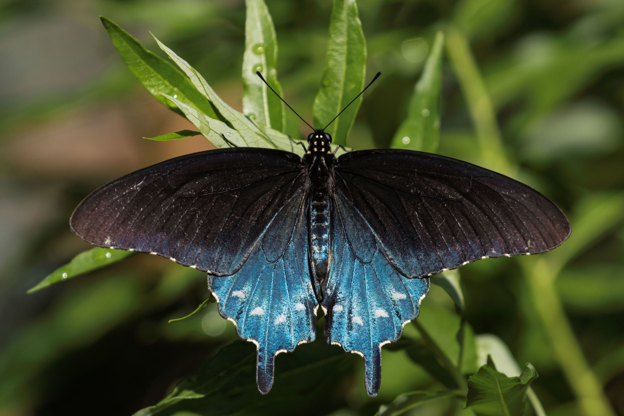 This Man Repopulated a Butterfly Species in His Backyard — and You Can, Too