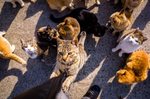Cat Island In Japan Aoshima Japan Known As Cat Island