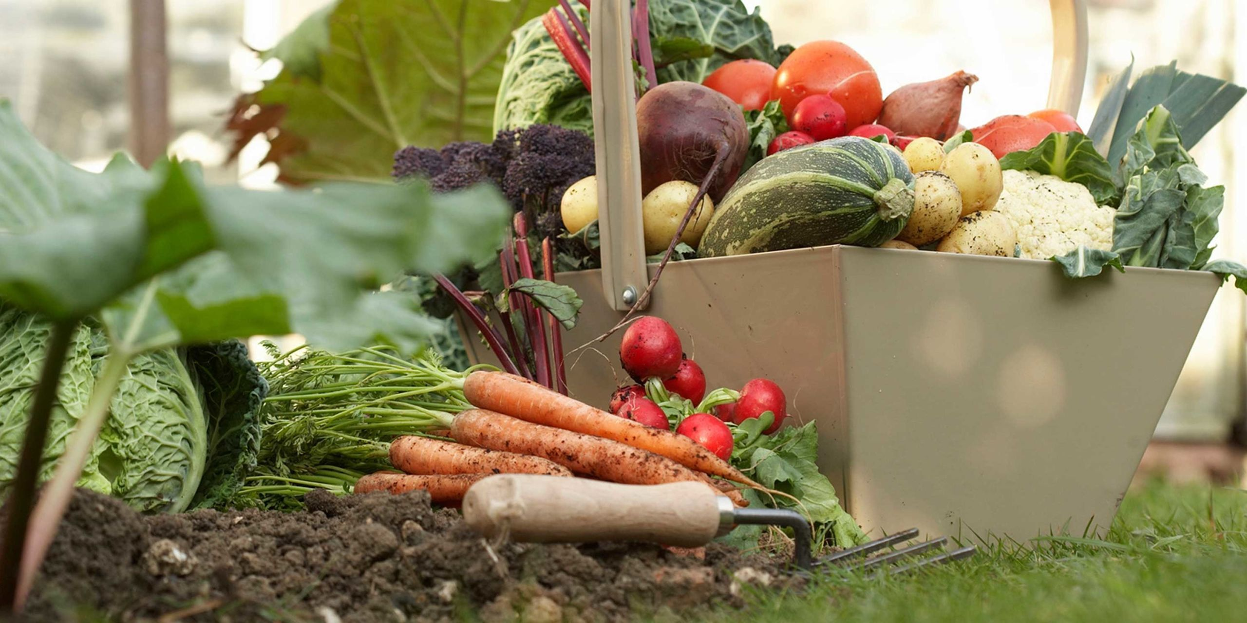 8 Things to Plant Now for Your Fall Vegetable Garden
