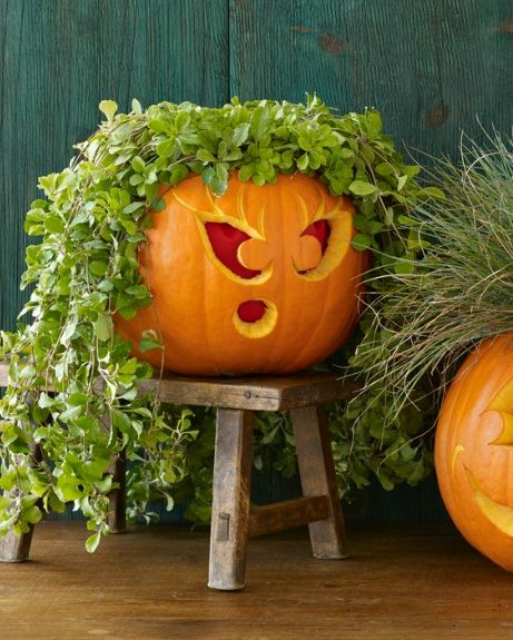 Plant Pumpkin