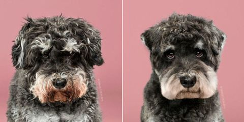 You Have to See These Dogs Before and After Their Haircuts