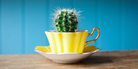 10 Office Plants That Won't Die On Your Desk