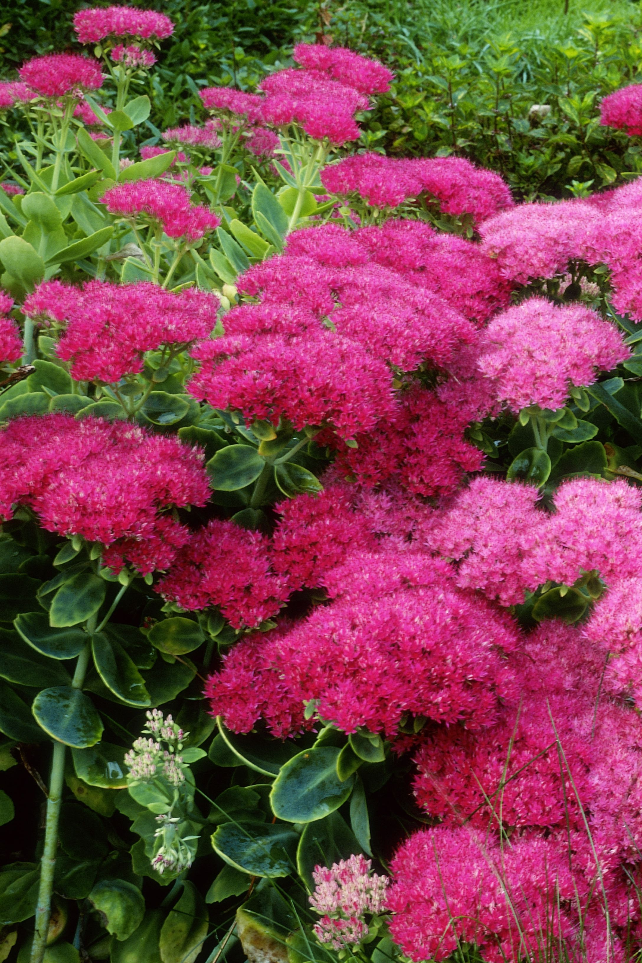 15 Best Fall Flowers Plants Flowers That Bloom In Autumn