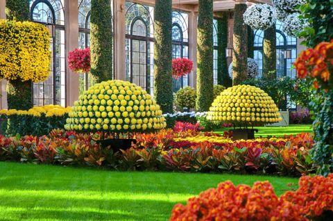 Chrysanthemum Festival Longwood Gardens