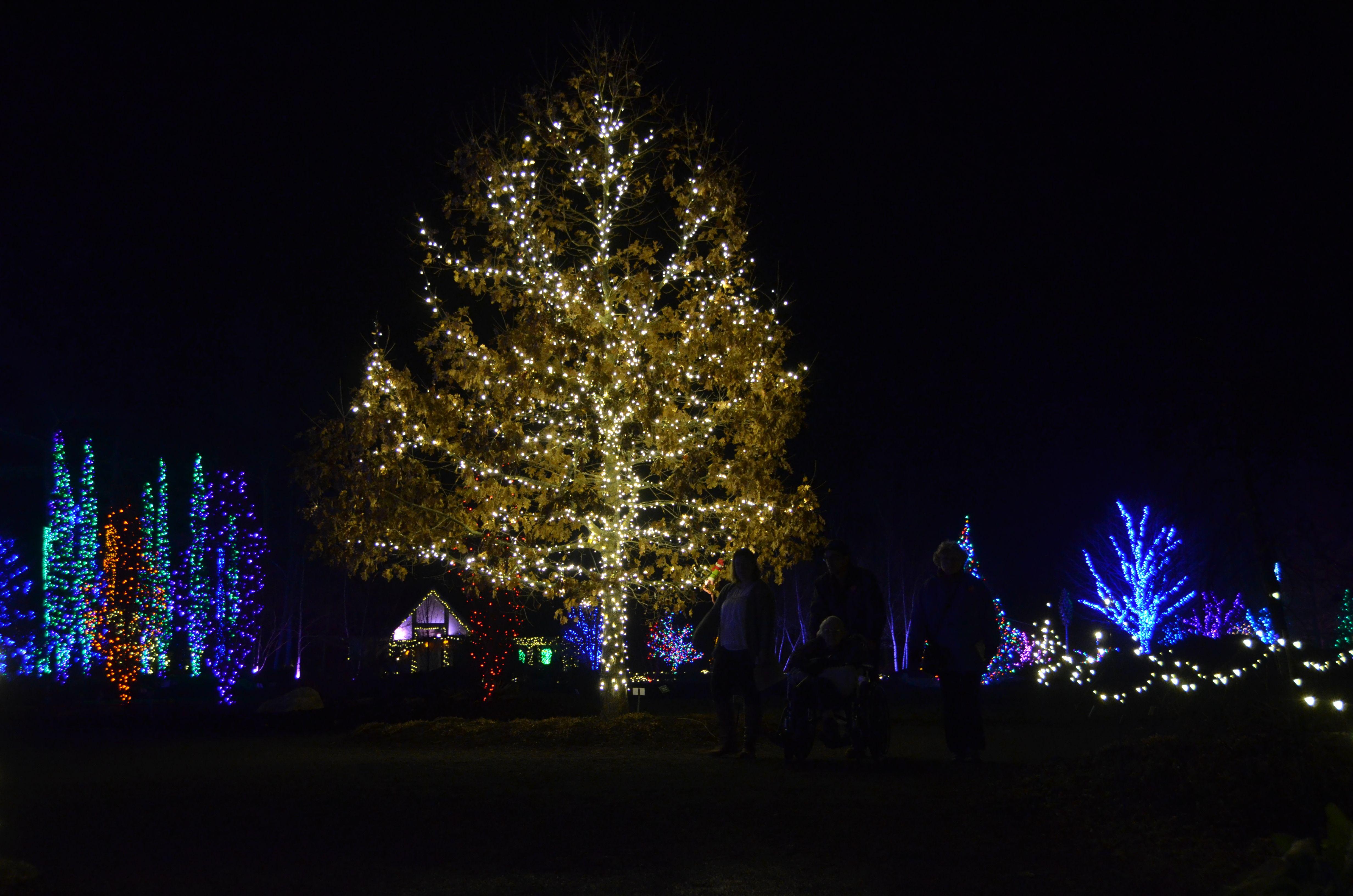 9 Botanical Gardens That Are More Beautiful at Night - Botanical Gardens