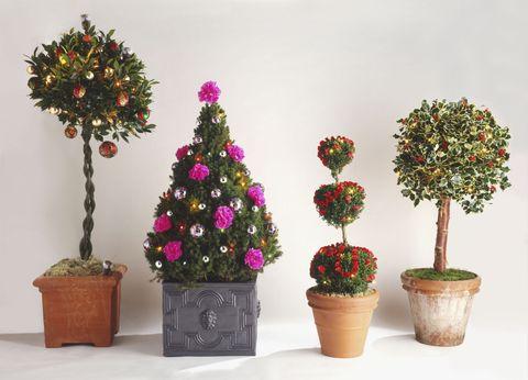 Turn Your Houseplants Into Festive Christmas Tree Alternatives