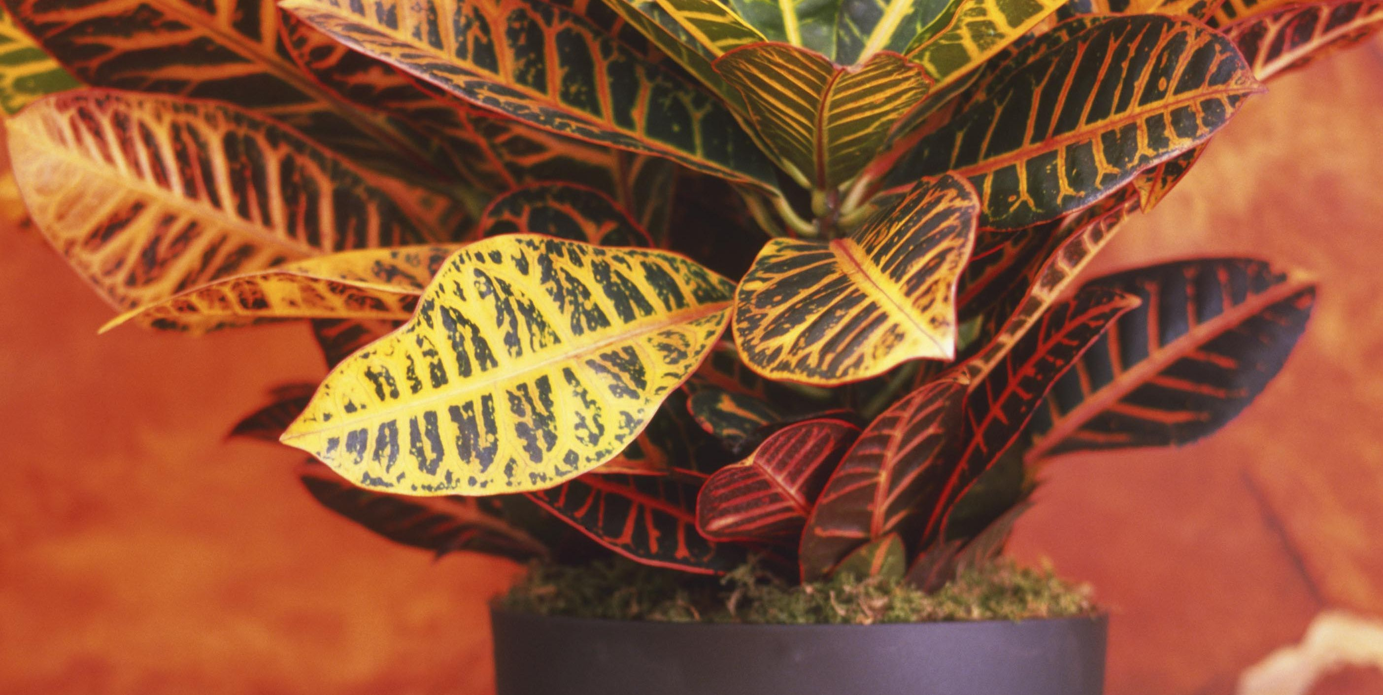 The Perfect Houseplants for Every Spot in Your Home