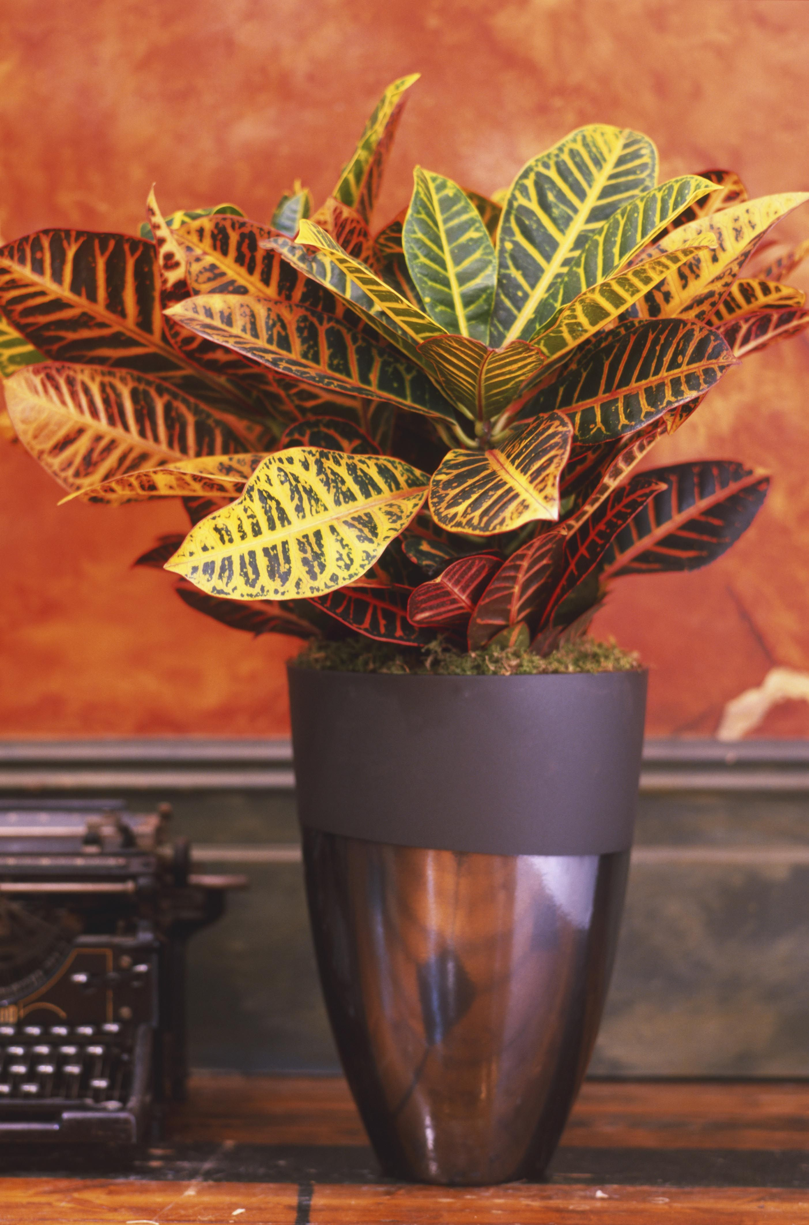 not all houseplants are made equally some require more sun more water more warmth and so on if youu0027re struggling to figure out the perfect variety to