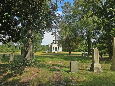 Grass, Plant, Tree, Land lot, Headstone, Woody plant, Cemetery, Trunk, Grass family, Groundcover,
