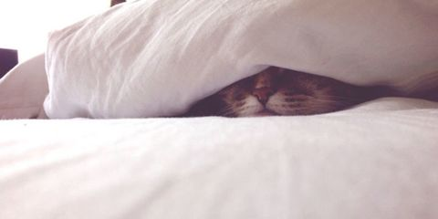 Skin, Comfort, Small to medium-sized cats, Carnivore, Felidae, Cat, Nap, Photography, Sleep, Close-up,
