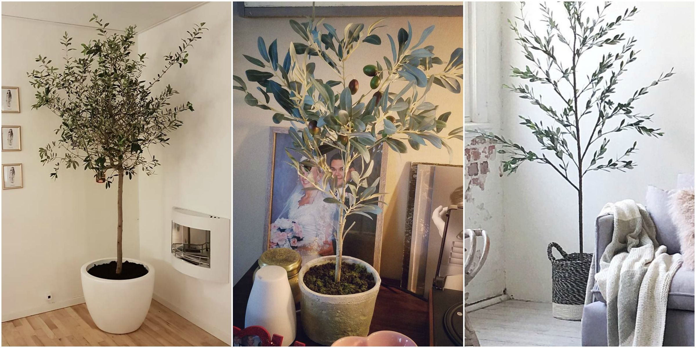 Olive Tree Decor How To Decorate With Olive Trees