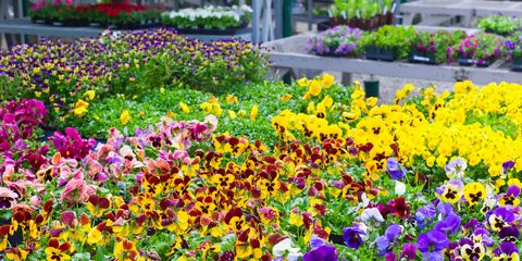 9 Gardening Trends That Will Be Taking Over Flower Beds This Year