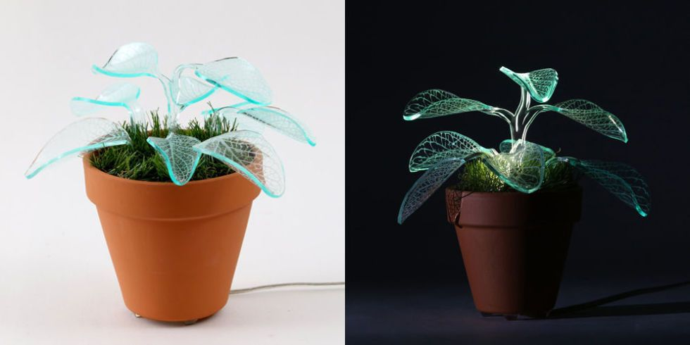 These Glow In The Dark Plants Are Just So Much Fun