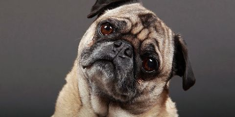 Your Dog Can Tell If Someone's a Bad Person