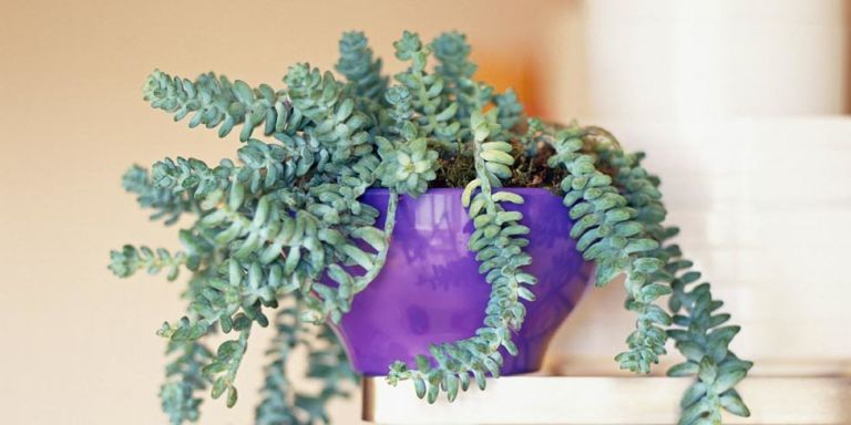 18 Strange, But Also Beautiful, Houseplants You Never Knew Existed