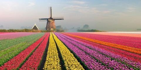 Proof That Europe's Tulip Fields Are the Ultimate Spring Destination