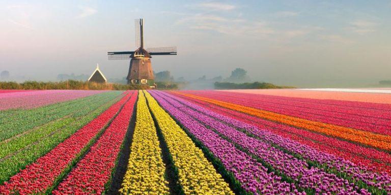 Earn tulips trust