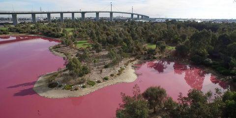 Westgate Park pink lake in Melbourne, Australia
