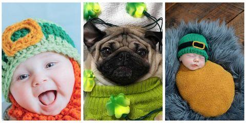 Green, Skin, Pug, Dog, Carnivore, Mammal, Toy dog, Baby & toddler clothing, Iris, Headgear,