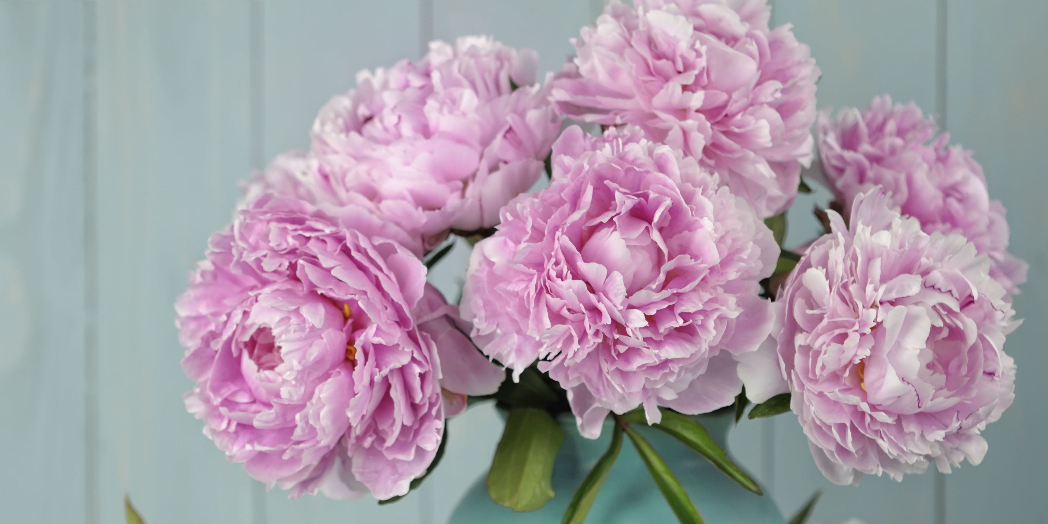 9 Tips for Growing the Perfect Peonies