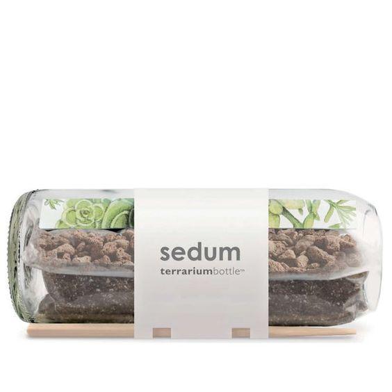 TerrariumBottle Sedum Planter