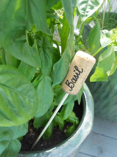 Flower, Leaf, Plant, Leaf vegetable, Vegetable, Spinach, Food, Herb, Arugula, Sorrel,