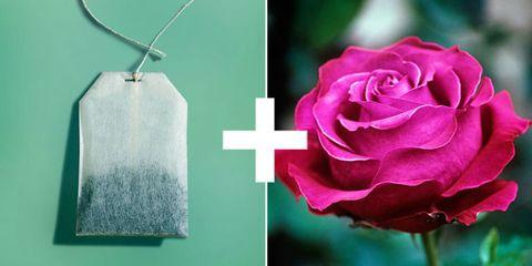 Pink, Garden roses, Rose, Petal, Flower, Rose family, Plant, Magenta, Rose order, Still life photography,