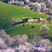 Plant community, Landscape, Pasture, Field, Grassland, Rural area, Slope, Groundcover, Plain, Shrub,