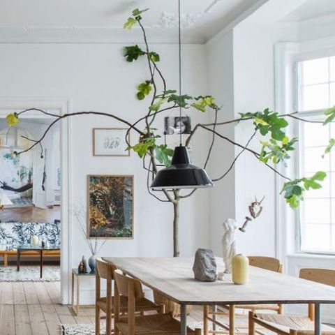 The Best Indoor Trees and Large Plants to Fill Your Home With
