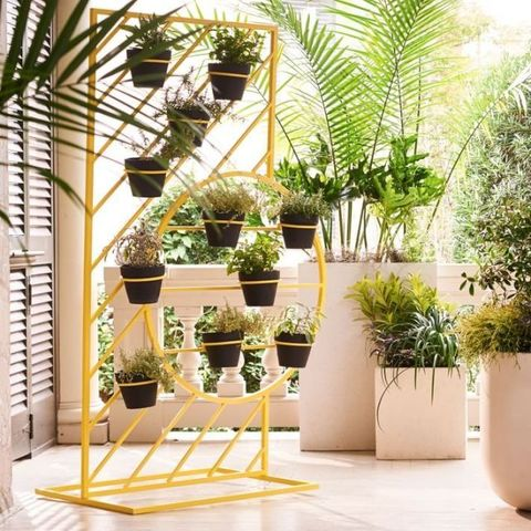 Flowerpot, Houseplant, Yellow, Furniture, Interior design, Architecture, Plant, Room, Chair, Bamboo,