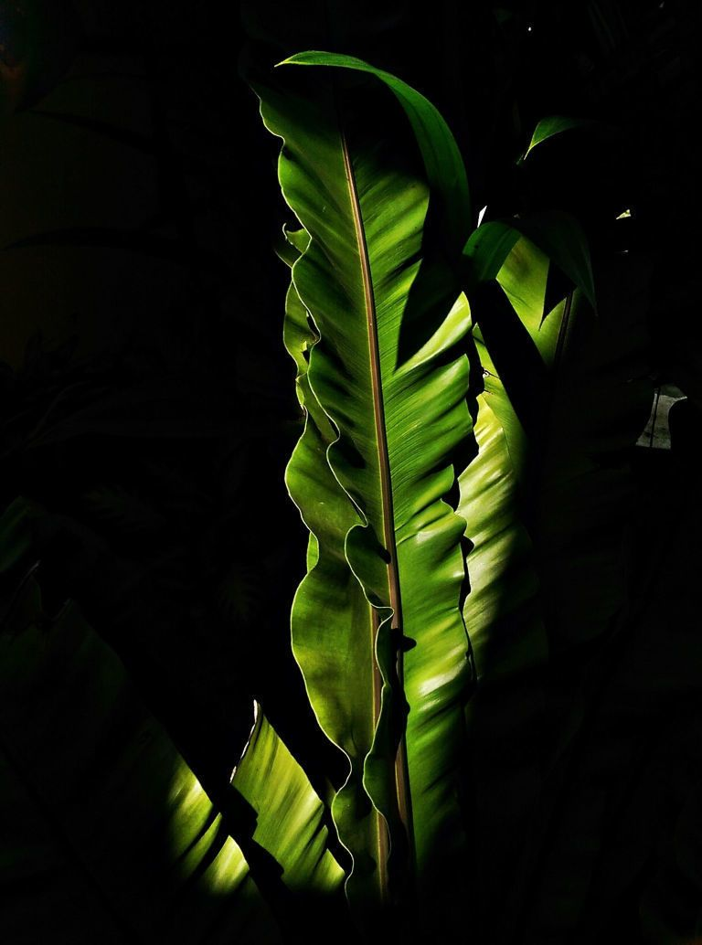 Banana Trees Are One of the Year's Hottest Houseplants