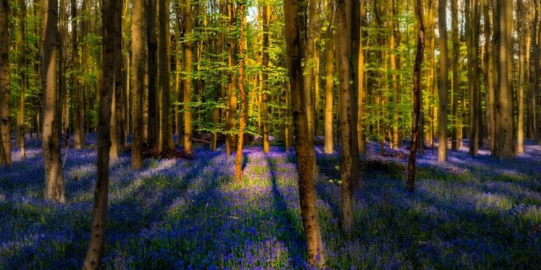 This Blue Forest in Belgium Is Just Too Magical