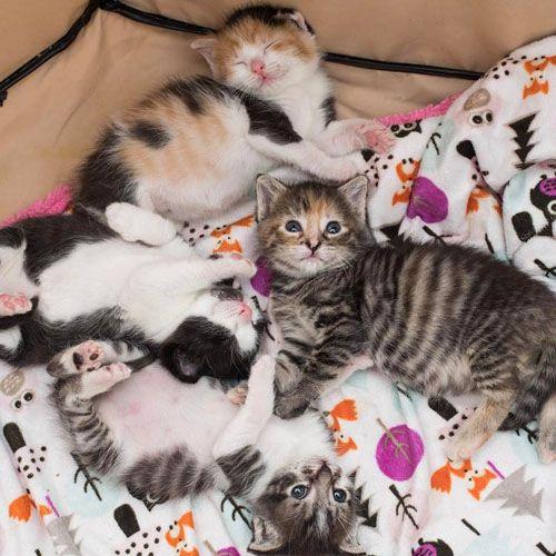 kitten lady instagram