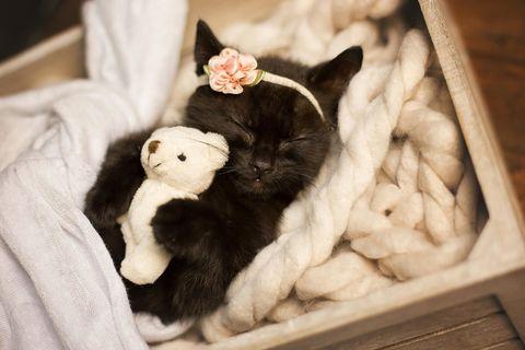This Newborn Kitten Photo Shoot is Super Sweet - This