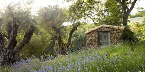 potting shed in lavender field