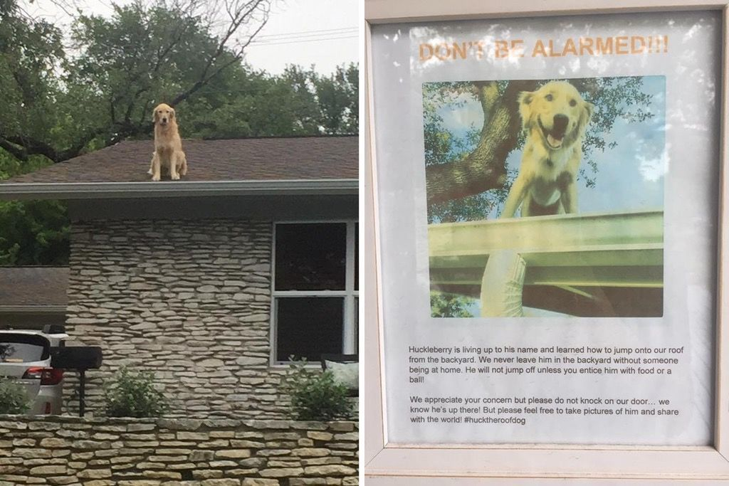 Family Posts Perfect Sign Explaining Why Their Dog Is on the Roof