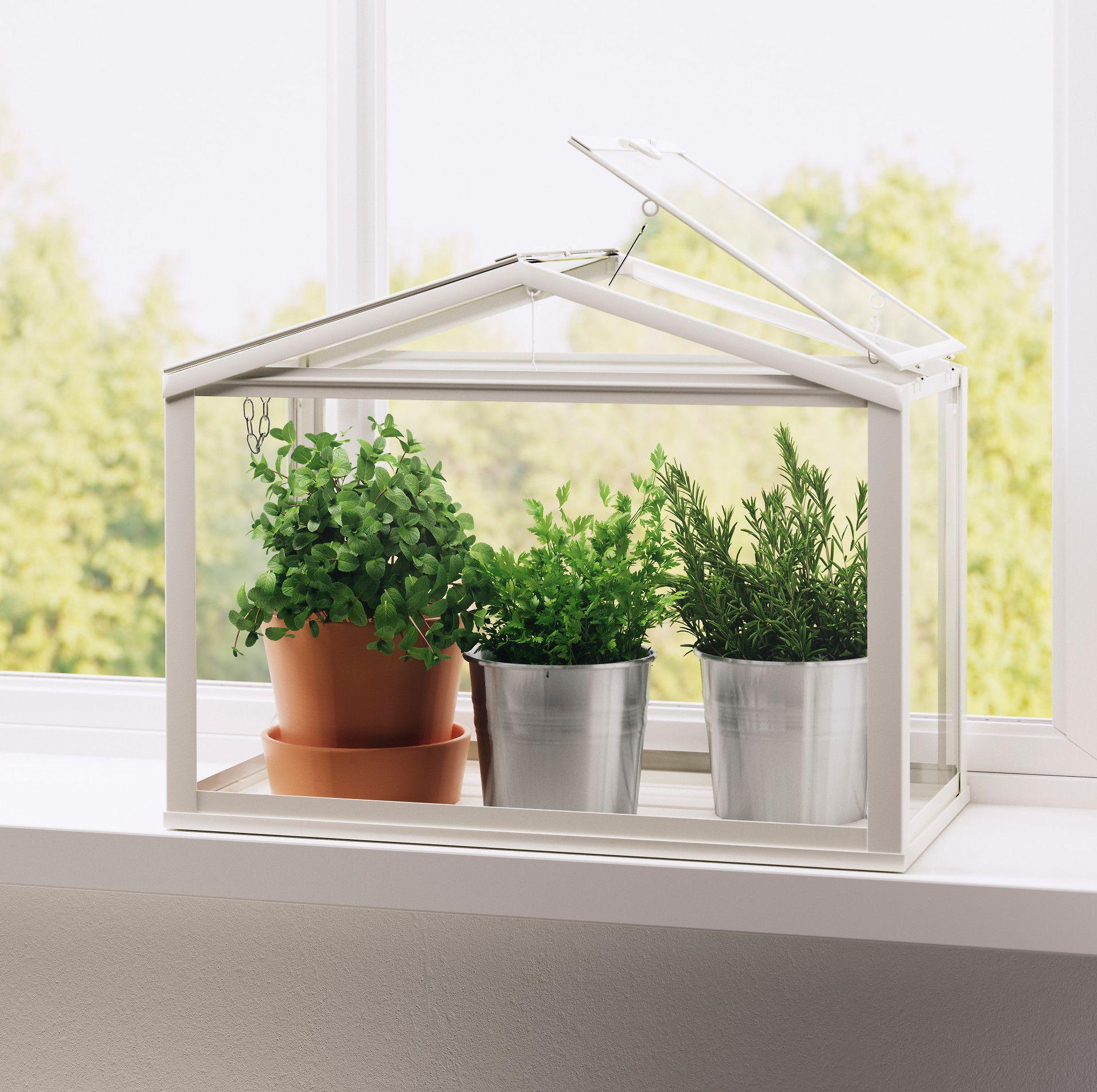 20 Best Indoor Plants - Good Inside Plants for Small Space Gardening