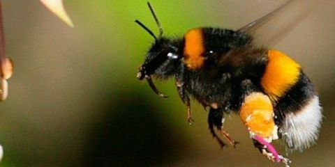 save-a-bumble-bee