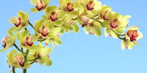 Nature, Yellow, Branch, Organism, Petal, Flower, Botany, Bud, Flowering plant, Spring,