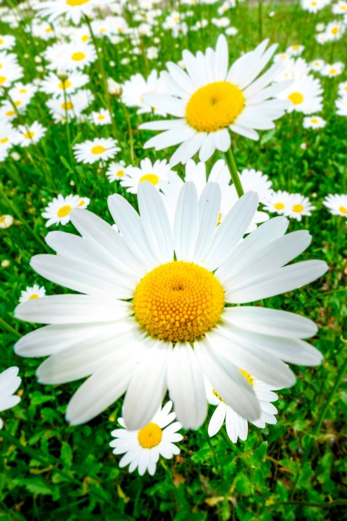 What Does Your Birth Flower Say About You Your Birth Flower Could