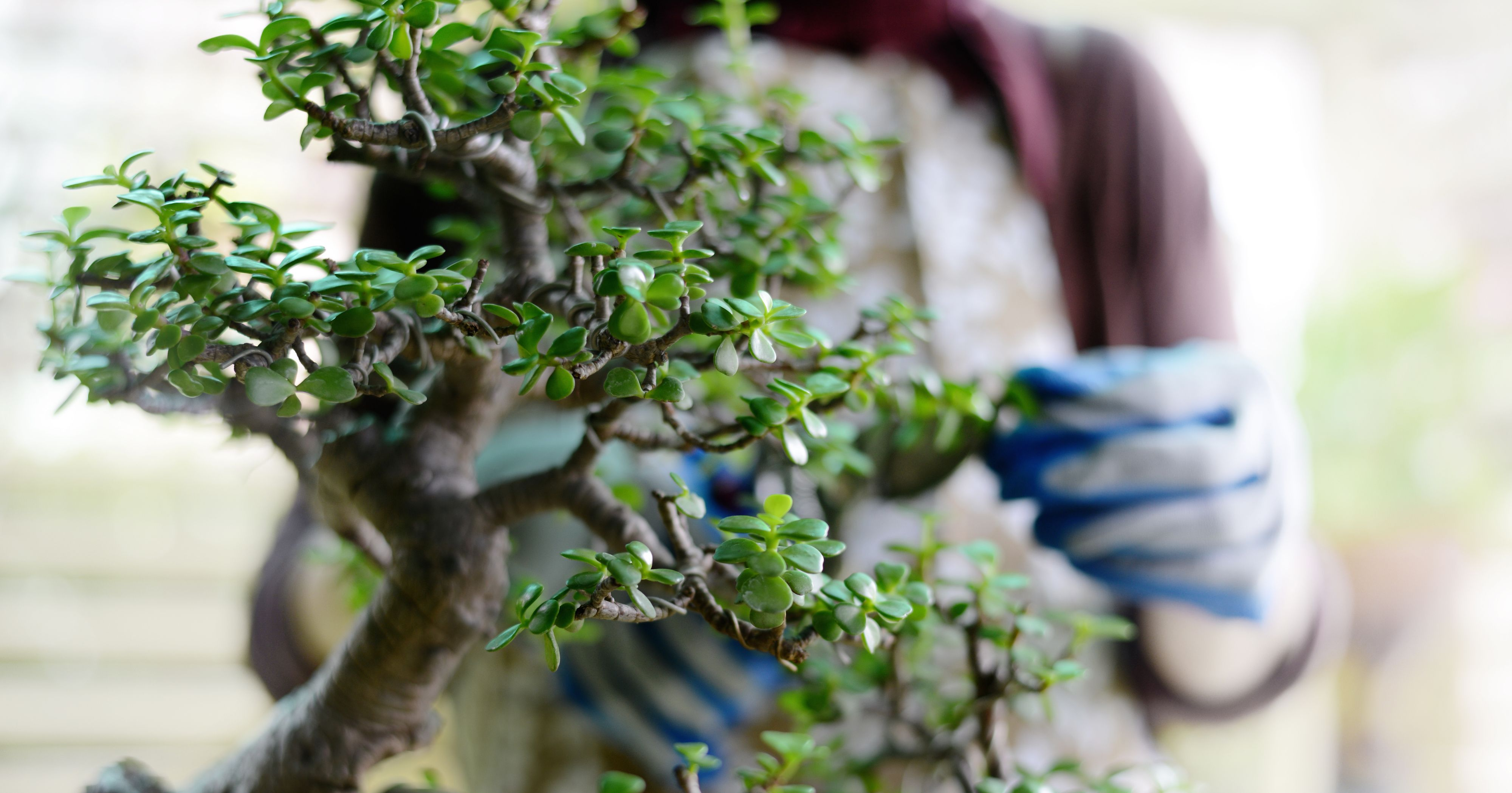 Aqua Bonsai Is The Coolest Gardening Trend Right Now Underwater Plants And Hydroponics