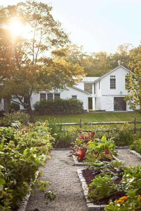Plant, Window, House, Leaf, Garden, Shrub, Home, Residential area, Sun, Cottage,