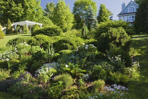 Garden, Vegetation, Tree, Shrub, Botanical garden, Plant, Yard, Botany, Lawn, House,