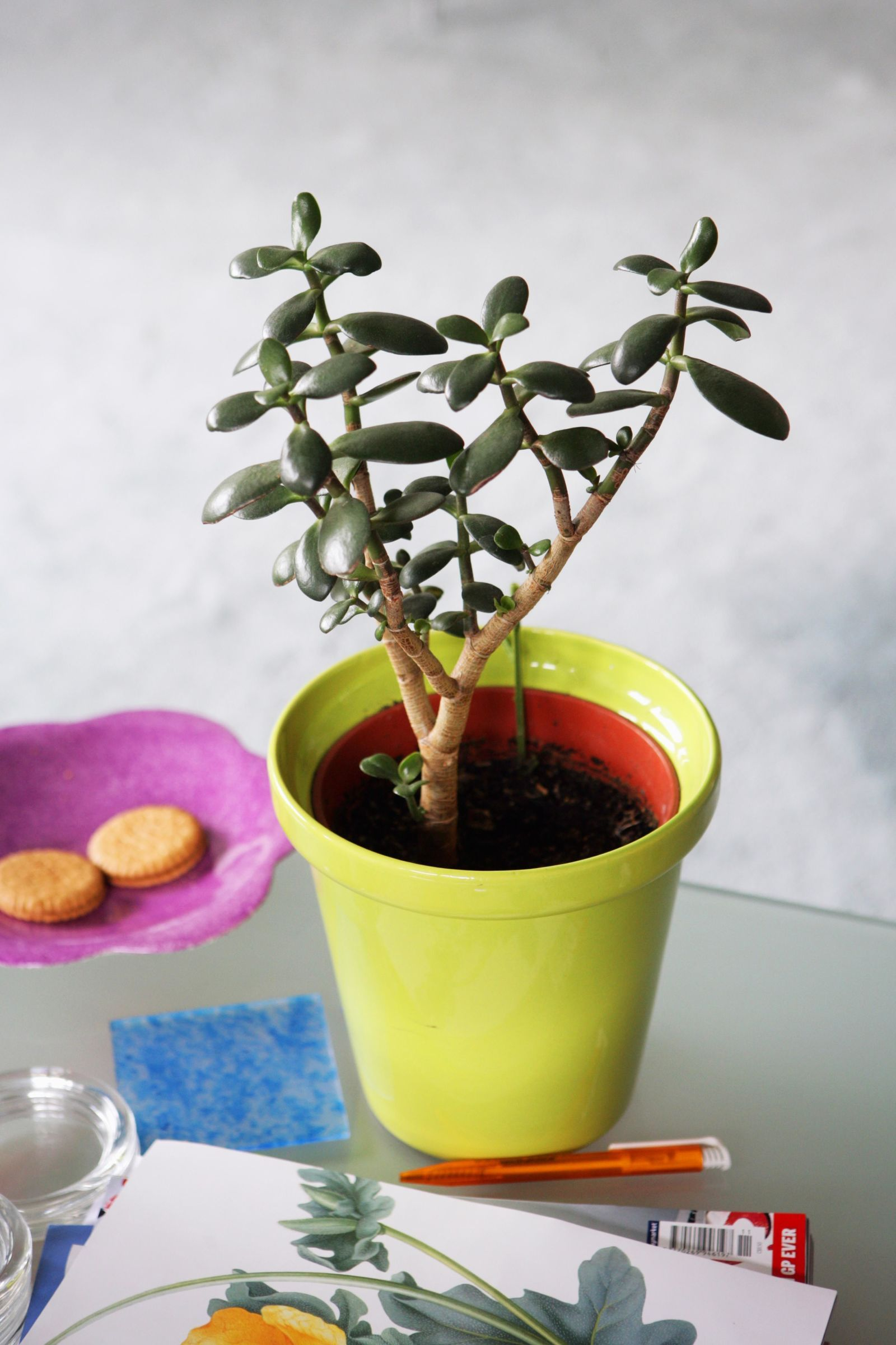 Contemporary Indoor Plants 18 Best Indoor Plants  Good Inside Plants For Small Space Gardening