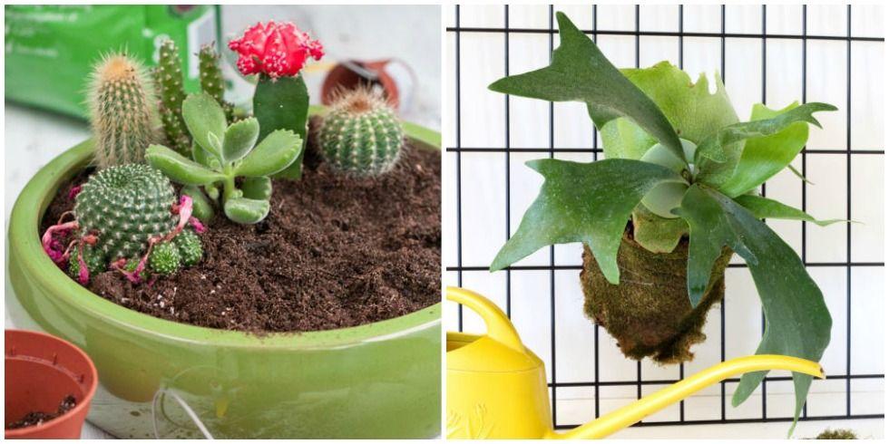 18 Best Indoor Plants - Good Inside Plants for Small Space Gardening