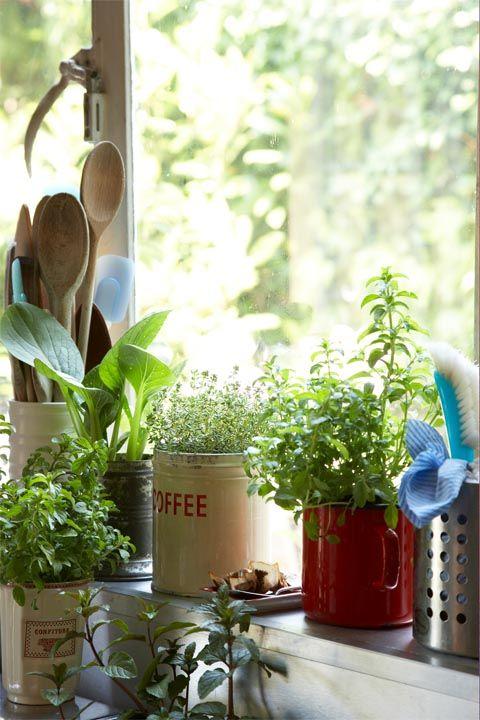 Flowerpot, Houseplant, Plant, Herb, Room, Flower, Window, Interior design, Fines herbes,