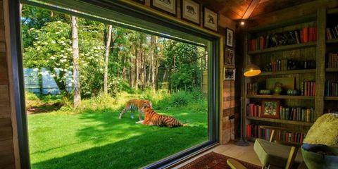 Tiger Lodge